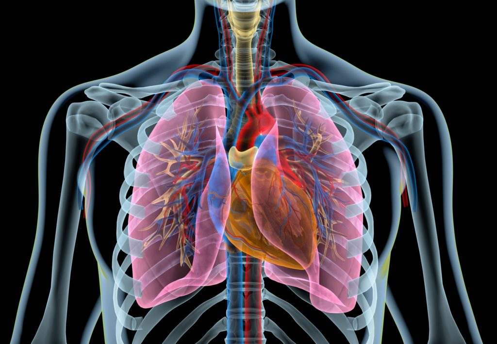 An x-ray image of lungs and the heart