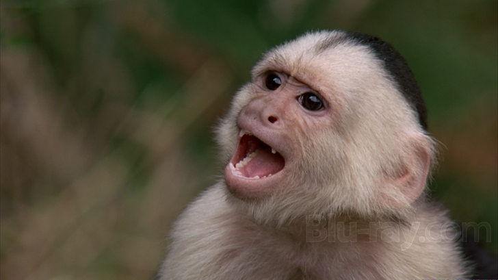 Monkey from the movie, Outbreak