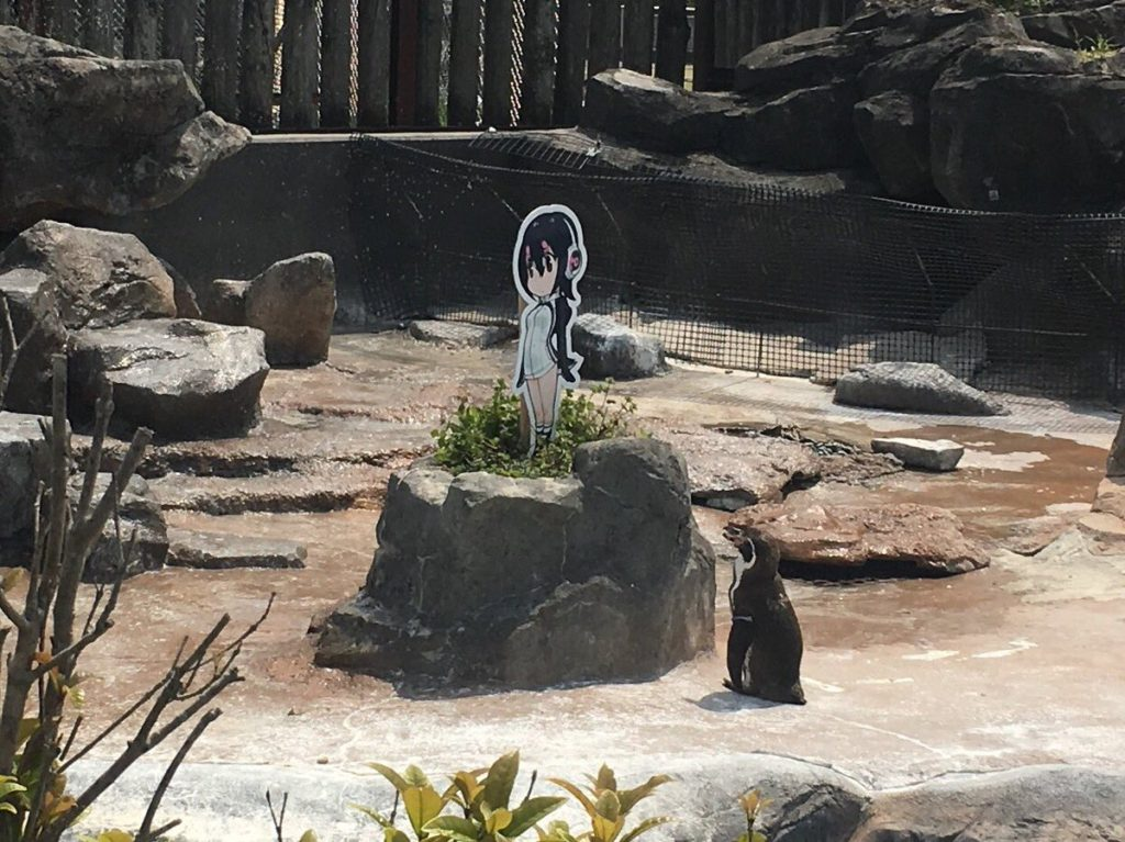 Penguin turned otaku by zoo